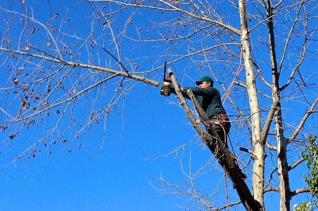 גיזום עצים בכפר סבא